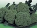 606 Broccoli